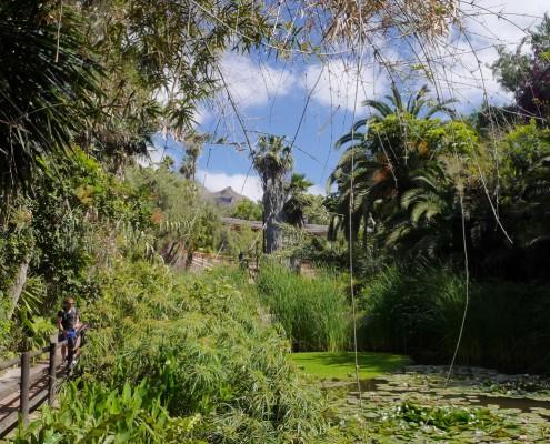 jungle park (1)